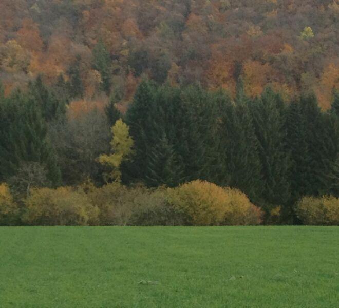 Paysage d'automne IMG_0743